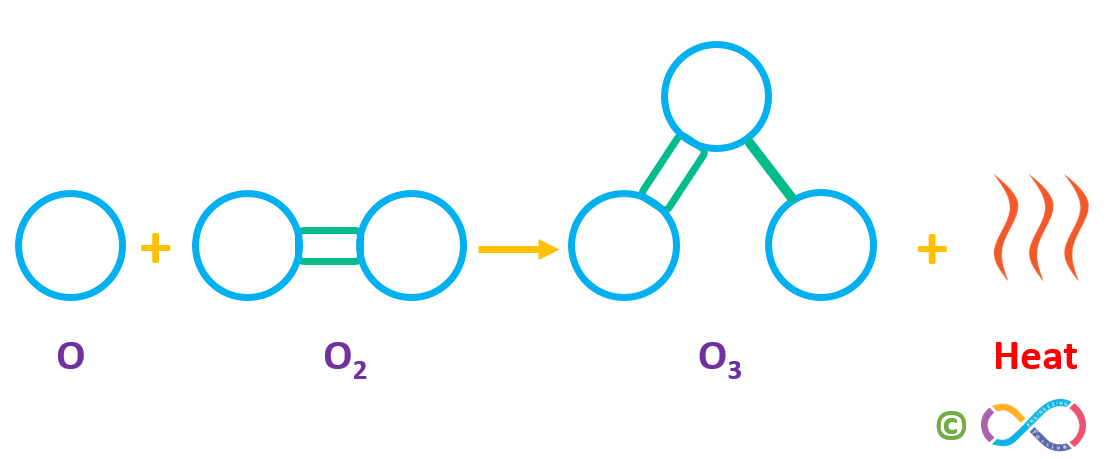 A freed atomic oxygen (O) then combines with another oxygen (O2) molecule to form a molecule of ozone (O3)