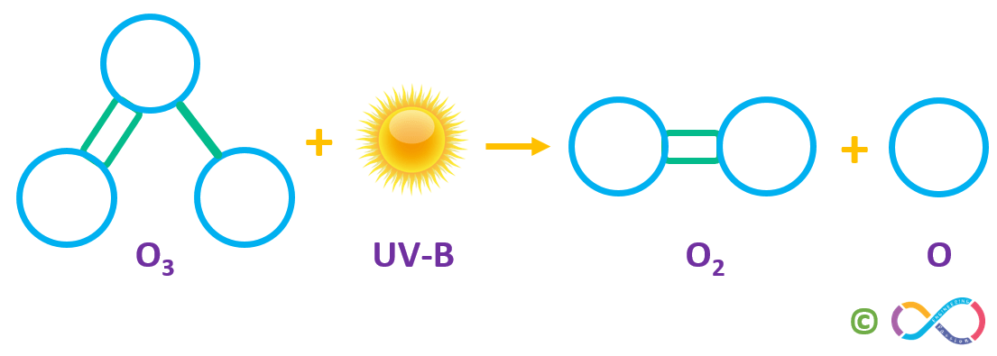 Ozone in the stratosphere absorbs much of the sun's UV-B rays, splitting back into molecular and atomic oxygen.